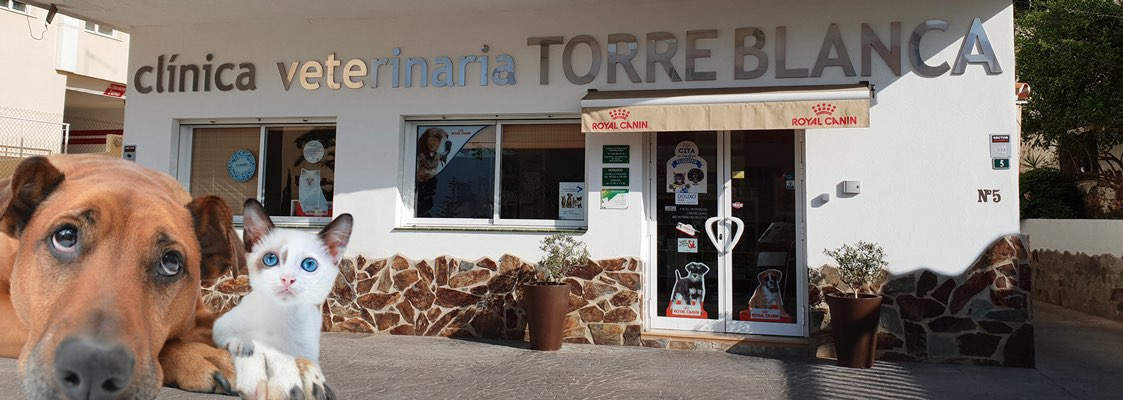 fachada clínica veterinaria Torreblanca