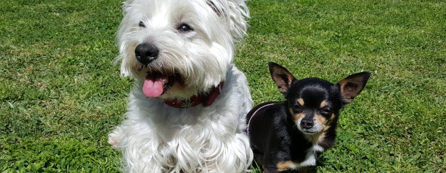 Tapón y Lupita